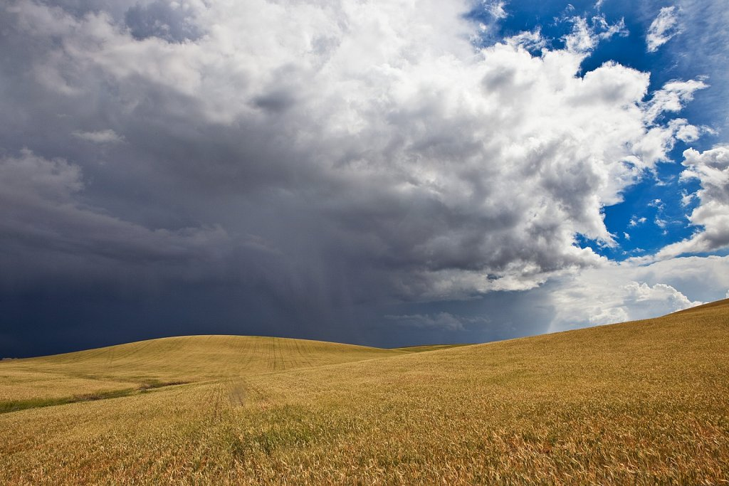Wheat field and approaching storm near Cordoba, Spain
