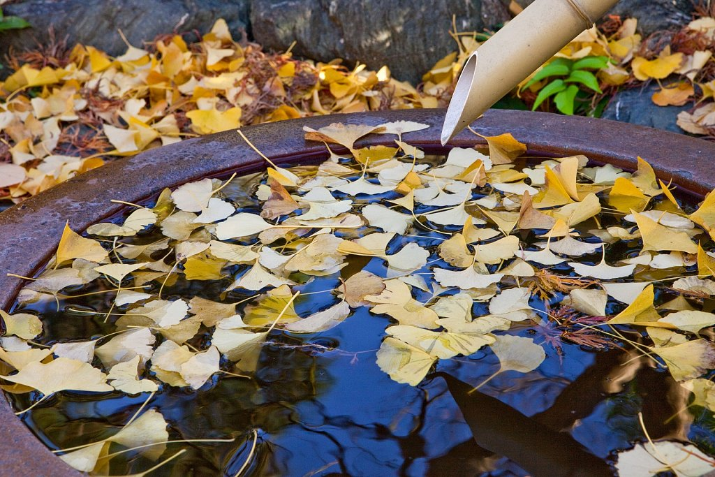Fountain with autumn ginko leaves at Yogenji Temple in Ikegami, Tokyo, Japan