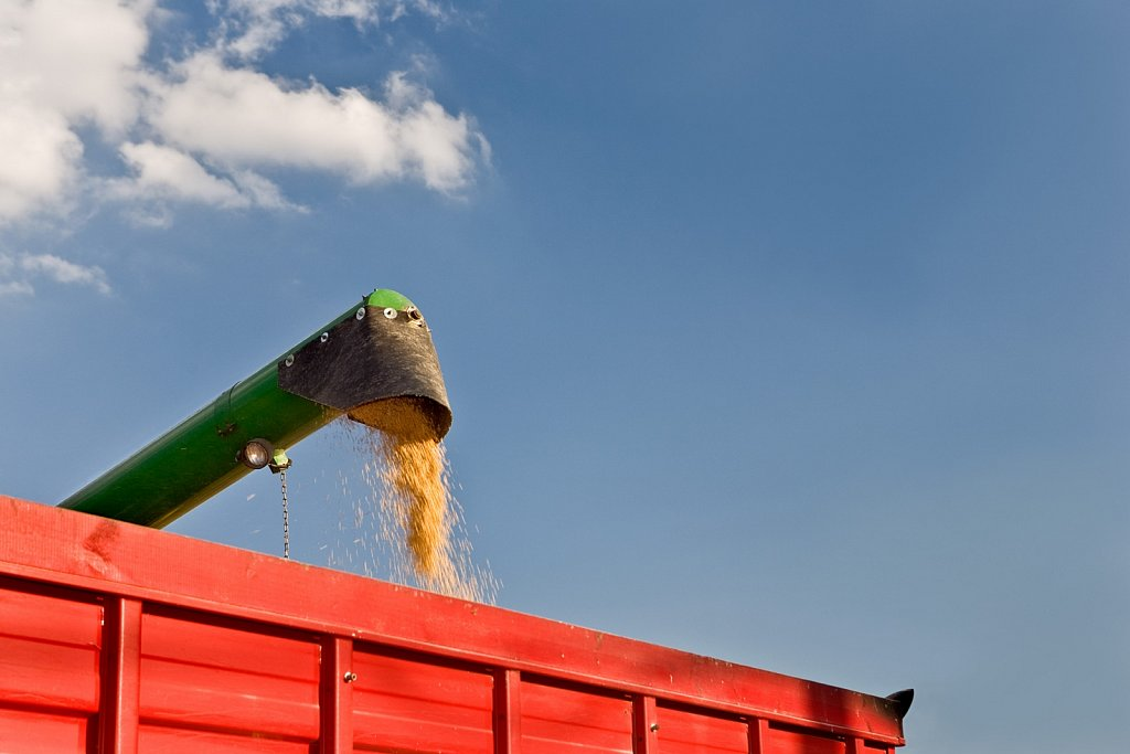 Combine transfers soy beans to truck
