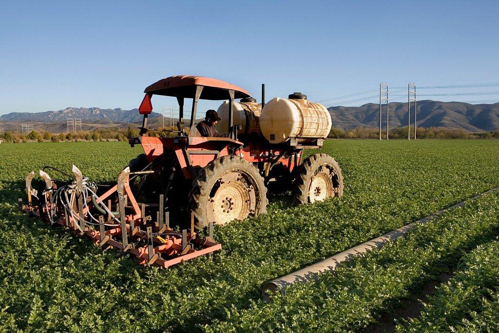 Fertilizing celery field, Camarillo, California